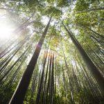 『植物学の父』牧野富太郎、愛にあふれた7つのコトバ + 1