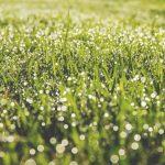 1000年生き続ける植物、ウェルウィッチア。『植物たちの爆発』の中、ボクらは生きている。